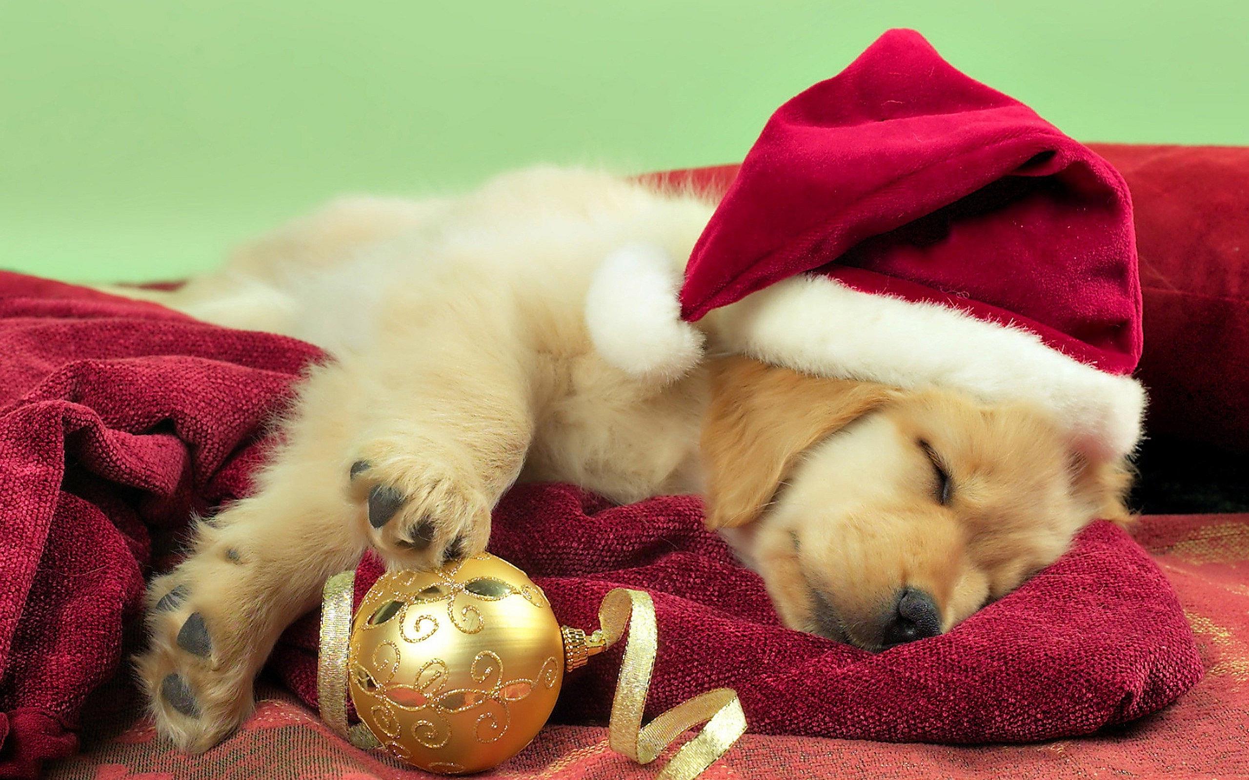 Yorkie Christmas Puppy Wallpaper