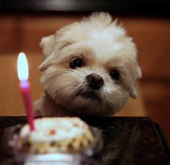 happy-birthday-puppy-1